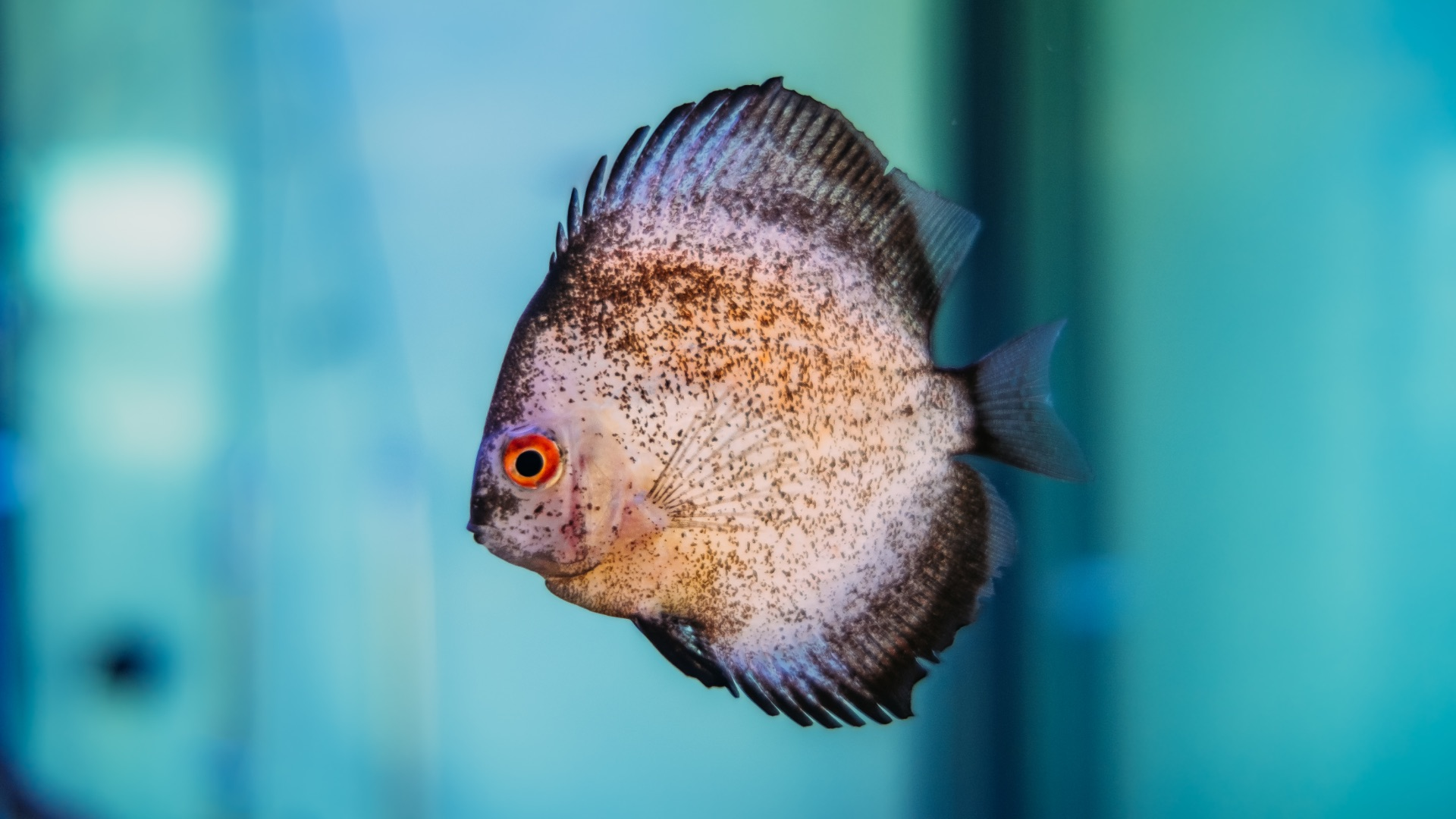 mundo do peixe